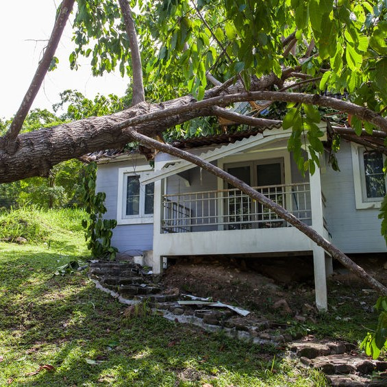 house with a fallen tree upon it